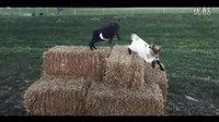 悠小羊Rennr