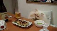 【猫爷】♂