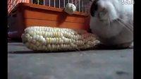✌兔兔兔兔兔子✌